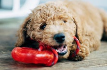 These Super Durable Dog Toys Are the Perfect Match for Your Canine